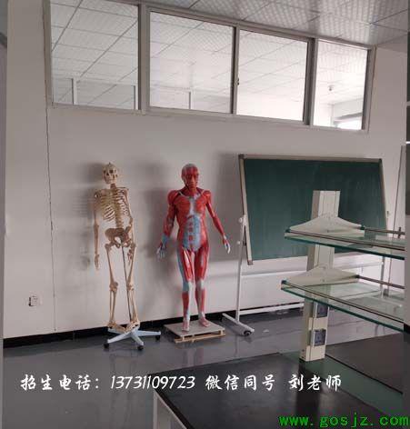 人体解剖学.jpg